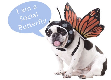 Social Butterfly Dog